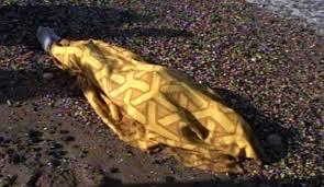 العثور على جثة مواطن مصري قتل طعنا وإطلاق نار
