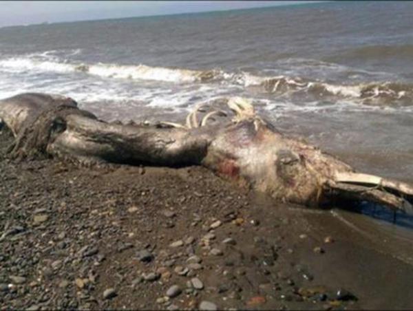 العثور على كائن ضخم يشبة الديناصور بروسيا
