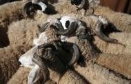 بلدي إمساعد يستغيث ويطالب بإنقاذ الثروة الحيوانية من التهريب