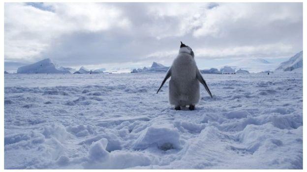 الإعلان عن إقامة أكبر محمية بحرية في العالم في القارة القطبية الجنوبية