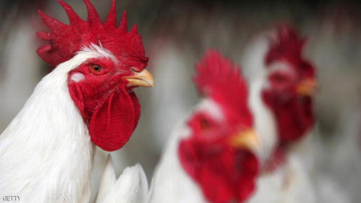 جيش كوريا الجنوبية يشارك في إعدام الدجاج