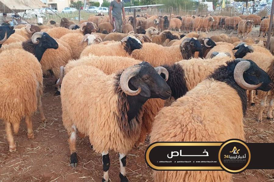 صورة وزارة الزراعة بالحكومة المؤقتة: حصر أكثر من 6 ملايين من الماشية منها 5 ملايين رأس غنم
