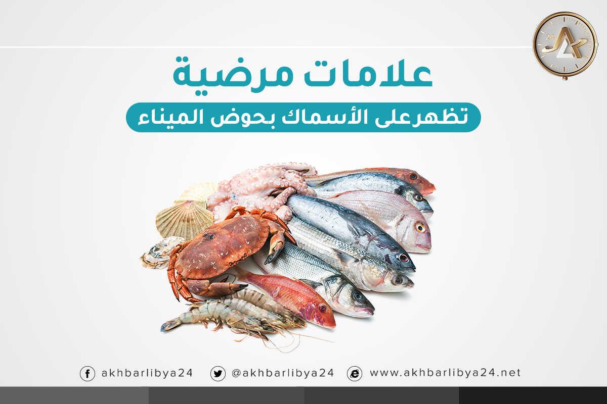 إنفوغرافيك - أخبارليبيا24
